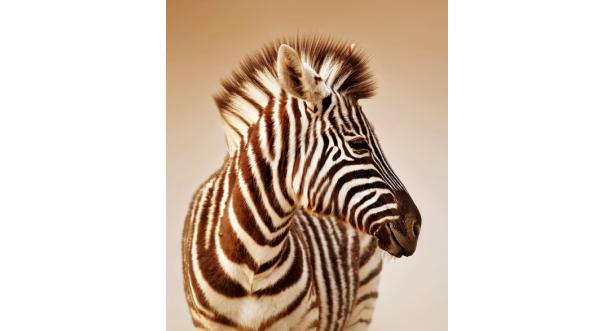 Животные 14