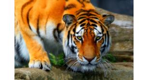 Фотоoбои Животные 17