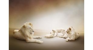Фотоoбои Животные 48