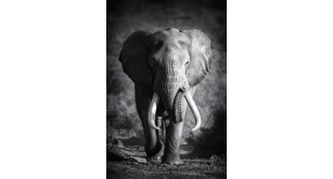 Фотоoбои Животные 56