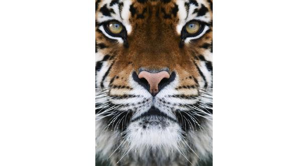 Животные 78