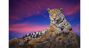 Фотоoбои Животные 138