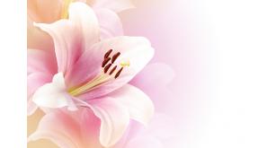 Фотоoбои Цветы 1