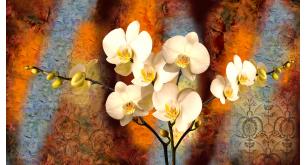 Фотоoбои Цветы 16