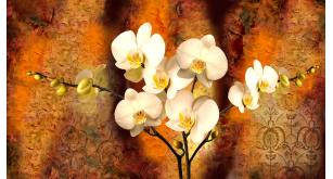 Фотоoбои Цветы 17