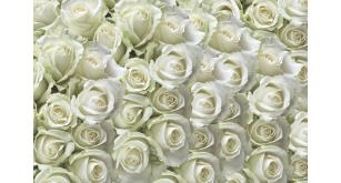 Фотоoбои Цветы 173