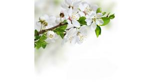 Фотоoбои Цветы 175