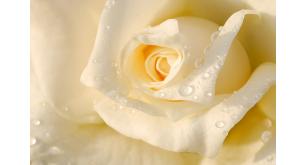 Фотоoбои Цветы 22