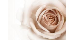 Фотоoбои Цветы 23