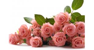 Фотоoбои Цветы 24