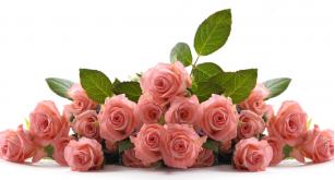Фотоoбои Цветы 25