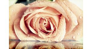Фотоoбои Цветы 26