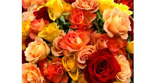 Фотоoбои Цветы 27