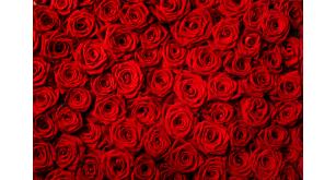 Фотоoбои Цветы 31