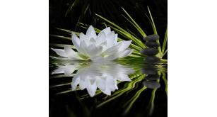 Фотоoбои Цветы 34
