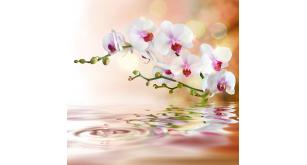Фотоoбои Цветы 35