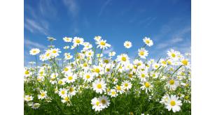Фотоoбои Цветы 36