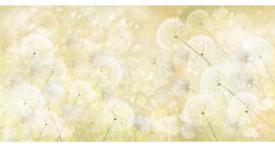 Фотоoбои Цветы 4