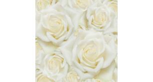 Фотоoбои Цветы 42