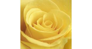Фотоoбои Цветы 43