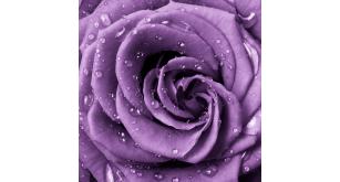 Фотоoбои Цветы 44