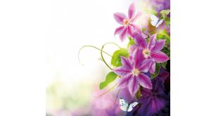 Фотоoбои Цветы 45