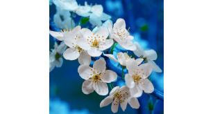 Фотоoбои Цветы 46