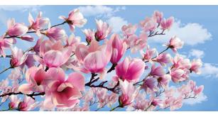 Фотоoбои Цветы 18
