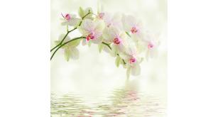 Фотоoбои Цветы 183