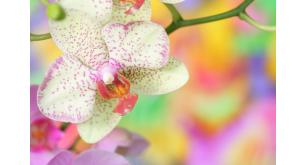 Фотоoбои Цветы 191