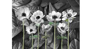 Фотоoбои Цветы 227