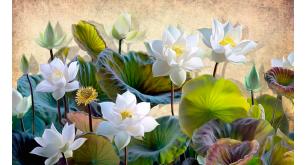 Фотоoбои Цветы 231