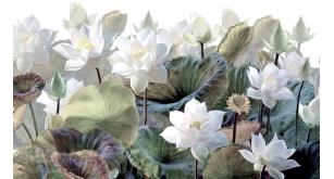 Фотоoбои Цветы 233