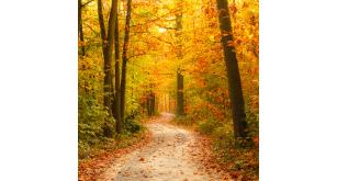 Фотоoбои Осень 1