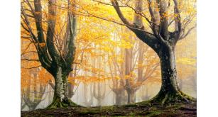 Фотоoбои Осень 10