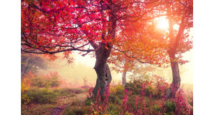 Фотоoбои Осень 11