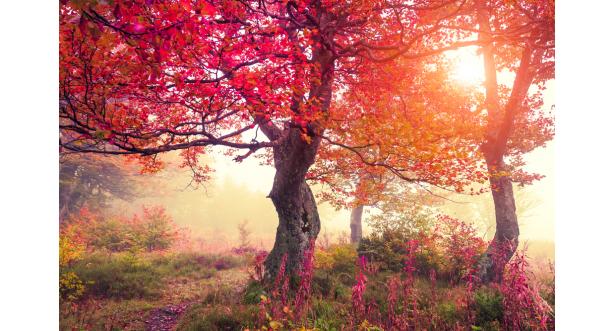 Осень 11