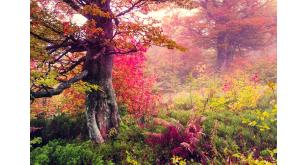 Фотоoбои Осень 12