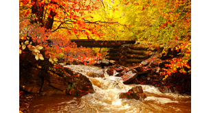 Фотоoбои Осень 13
