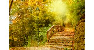 Фотоoбои Осень 15