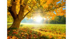 Фотоoбои Осень 16