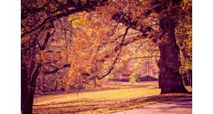 Фотоoбои Осень 17