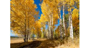 Фотоoбои Осень 18