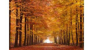 Фотоoбои Осень 19