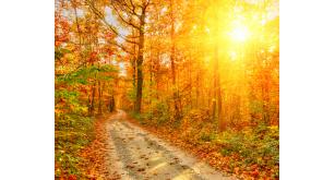 Фотоoбои Осень 2