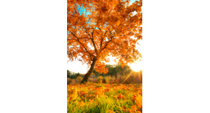 Фотоoбои Осень 20