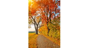 Фотоoбои Осень 21