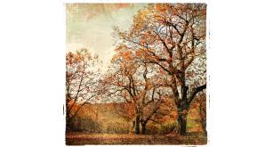 Фотоoбои Осень 22