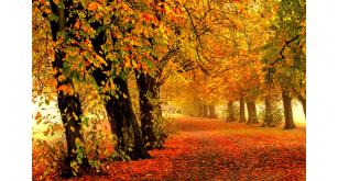Фотоoбои Осень 23