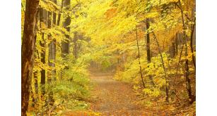Фотоoбои Осень 24